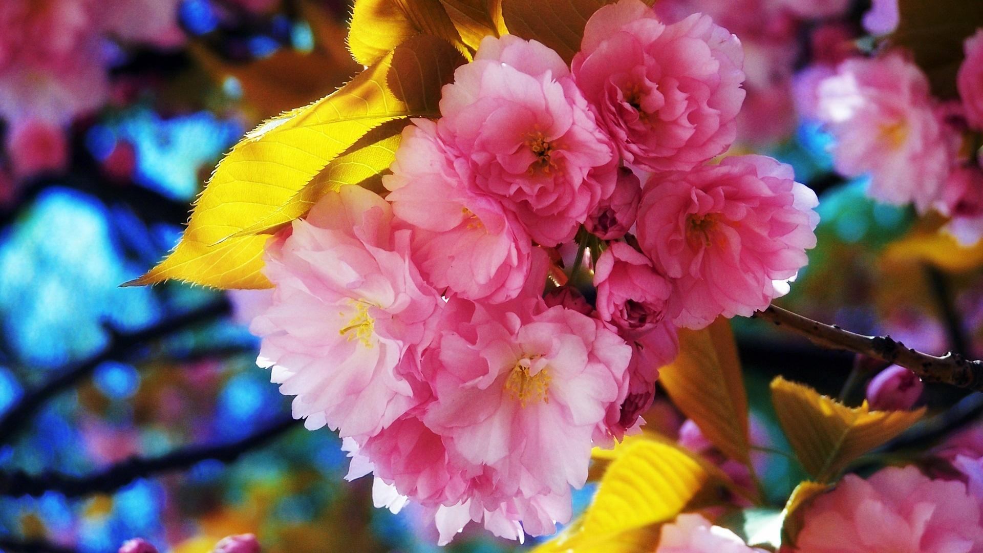 Beautiful Flowers 1920 1080 HD Wallpaper