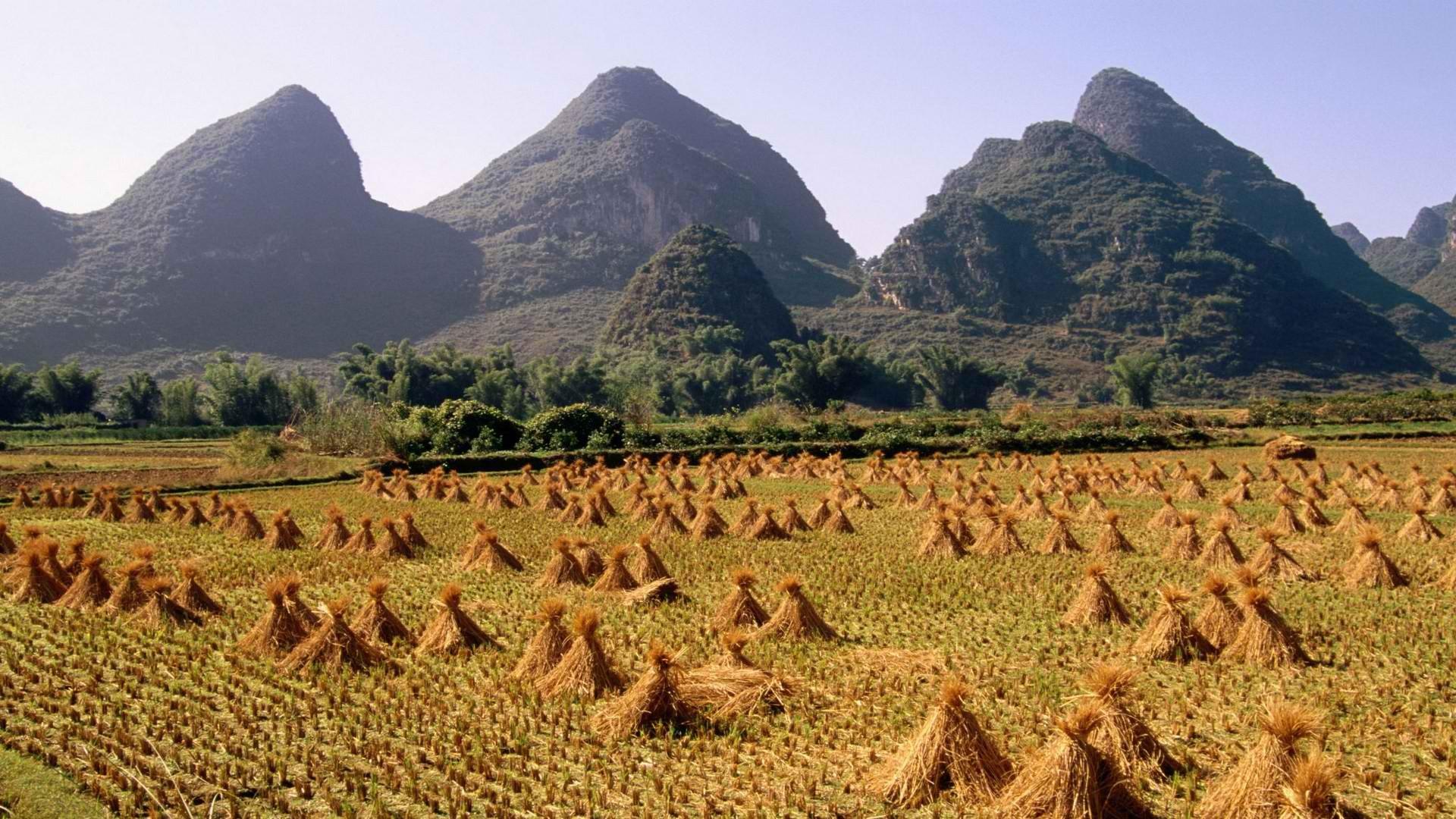 China Rice Yangshuo Rivers HD Wallpaper