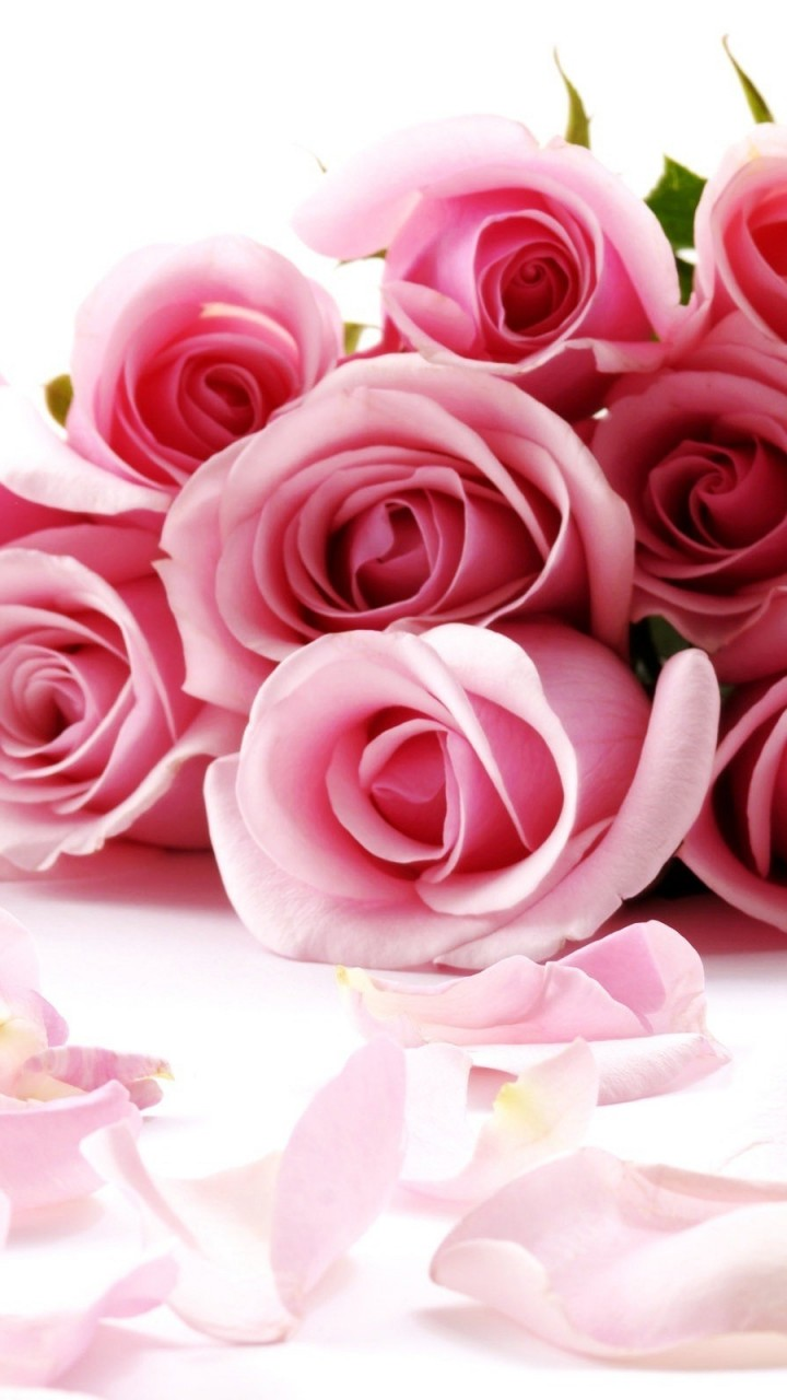 Rose Flowers With Pink Ribbion HD Wallpaper