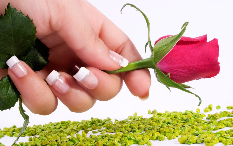 Rose  hands  nails  flowers HD Wallpaper