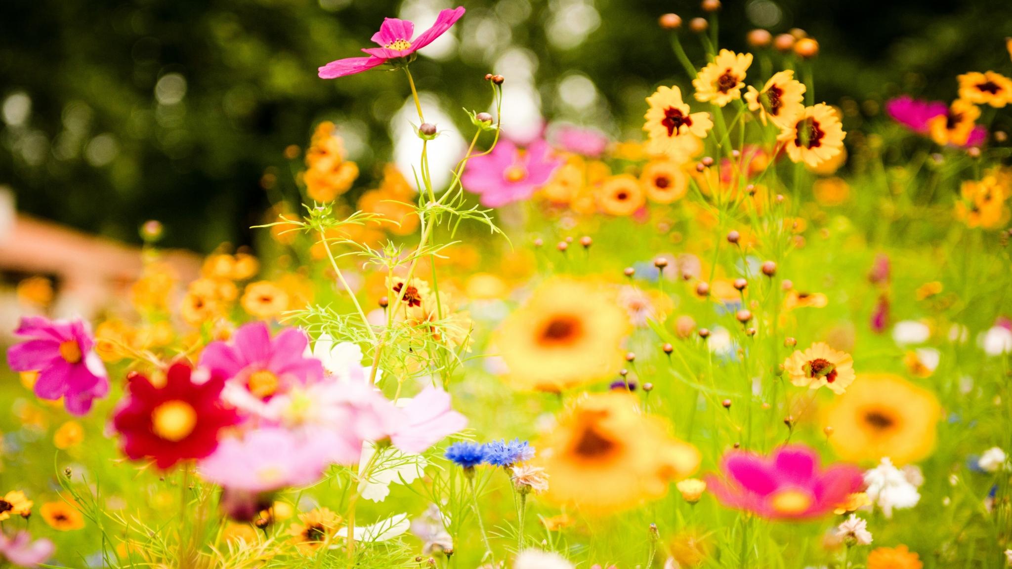 Download 2048x1152 Vivid Flowers Hd HD Wallpaper