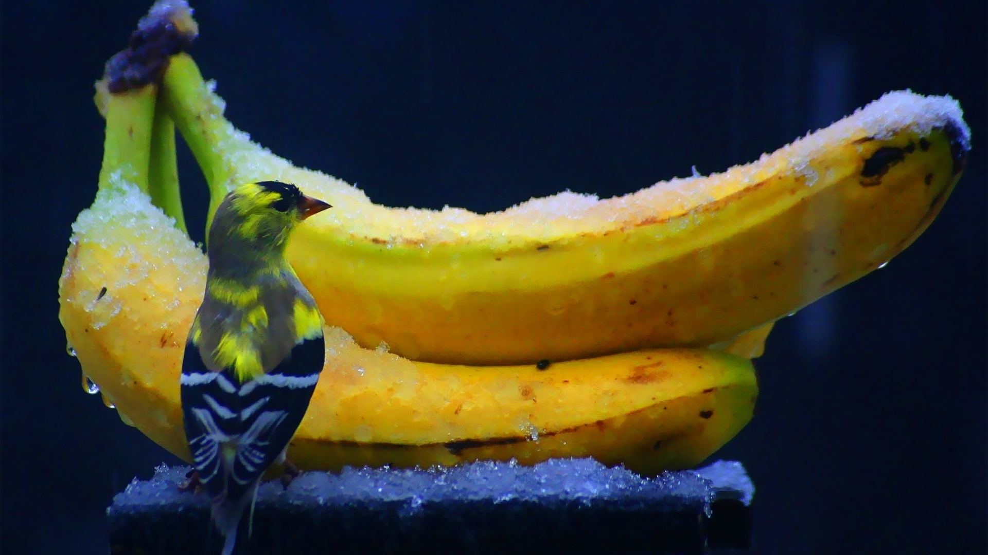 Bird Frozen Bananas And HD Wallpaper
