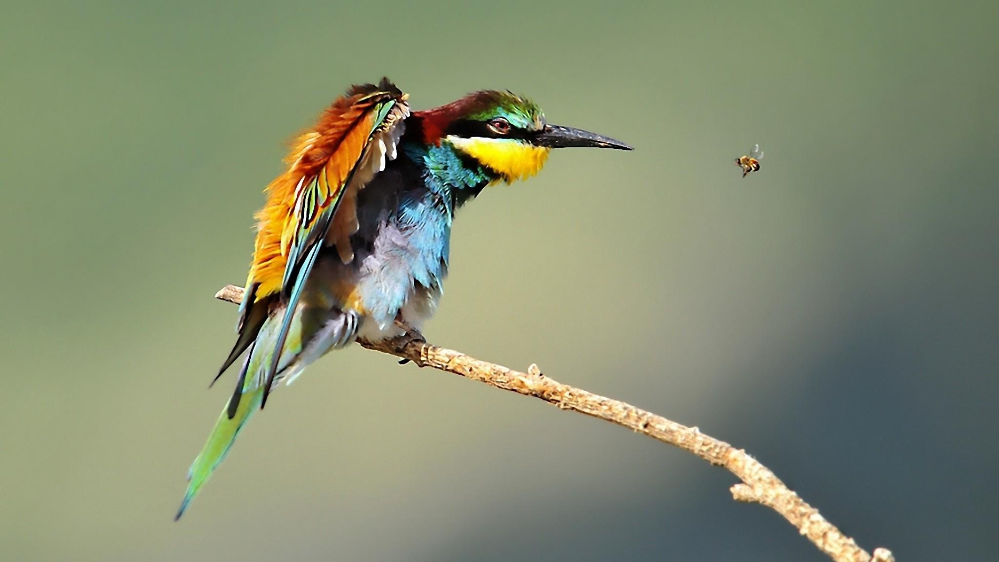 Животные пцицы и насекомые фото 6