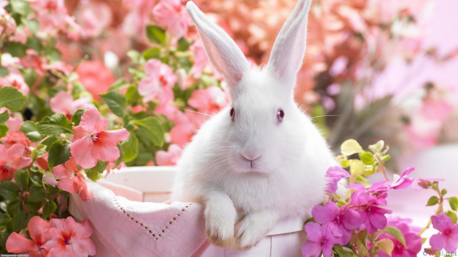 CUTE PICS OF PET ANIMAL HD Wallpaper