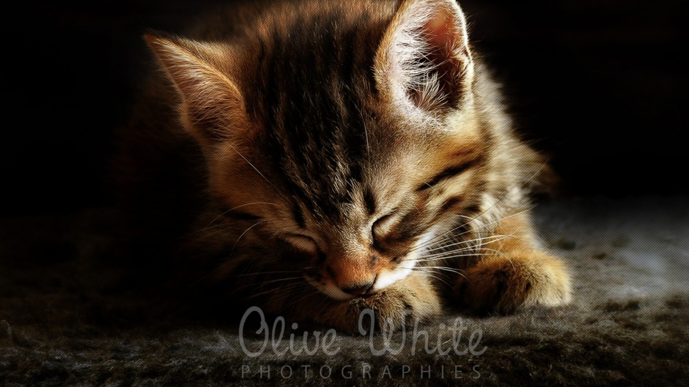 Corto le Chaton  HD Wallpaper