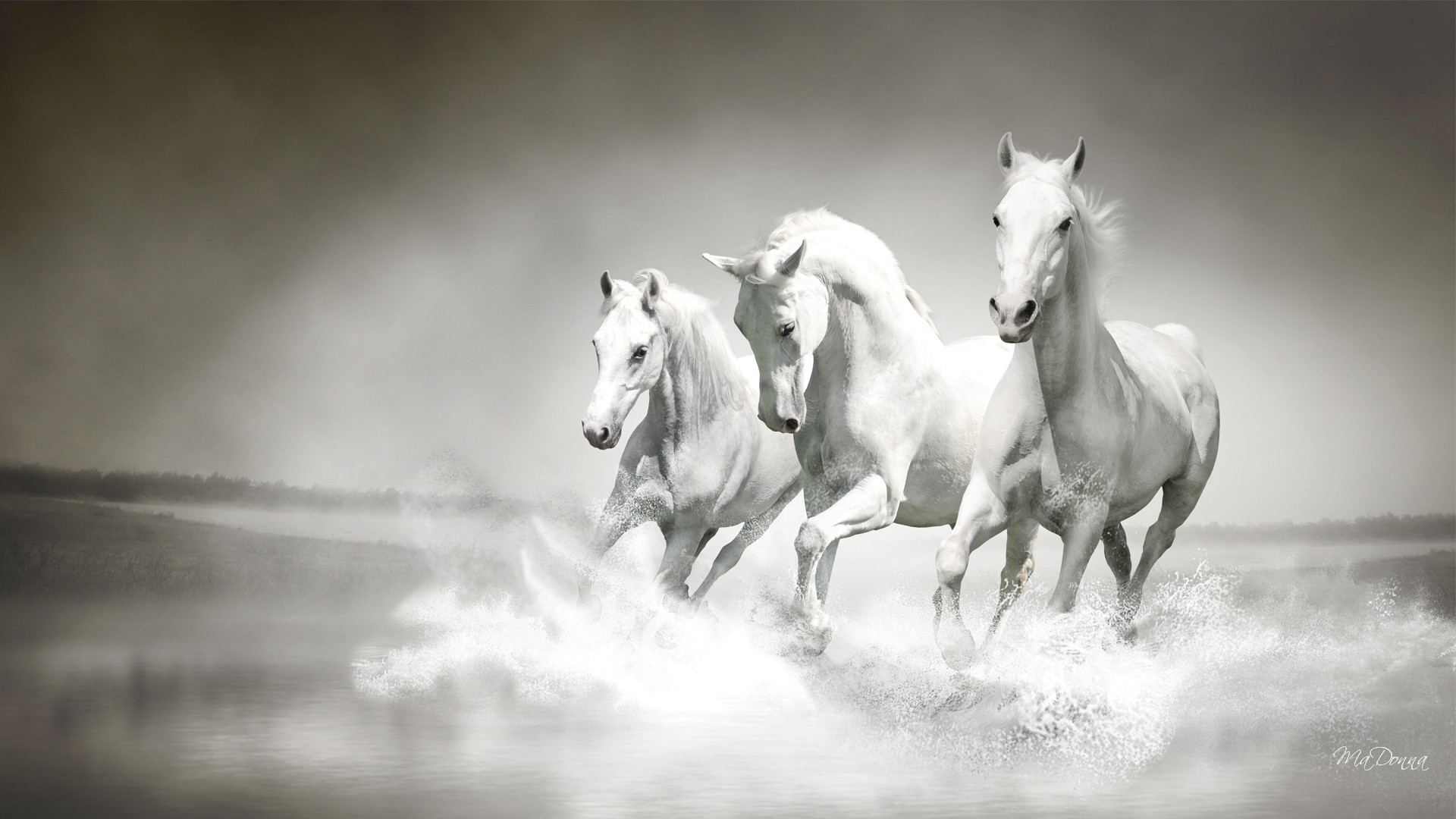 Running White Horse Pictures HD Wallpaper
