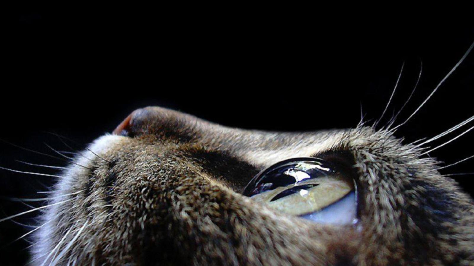 cats eye HD Wallpaper