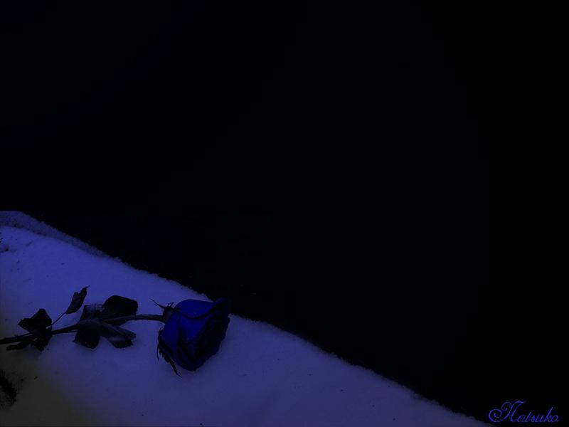 cool blue rose black plain HD Wallpaper