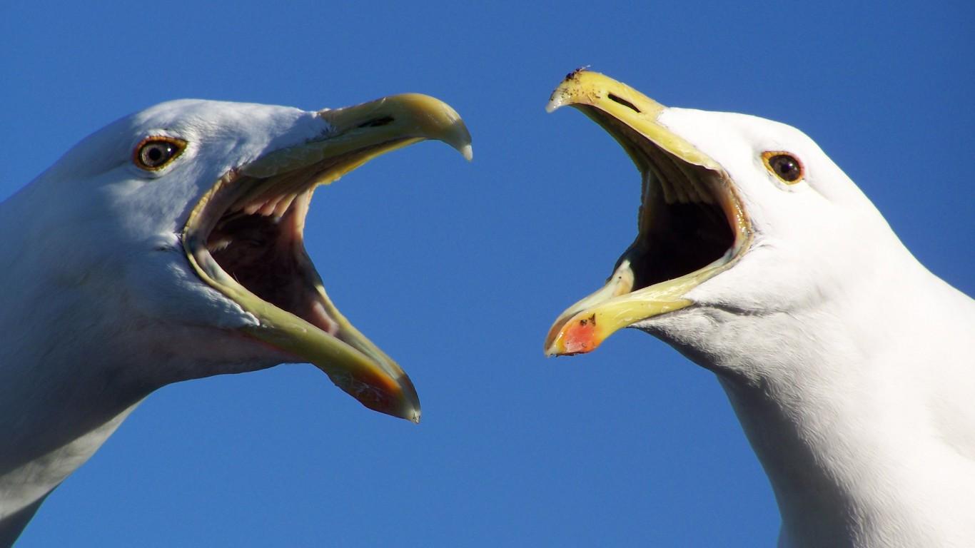 Birds seagulls blue skies HD Wallpaper