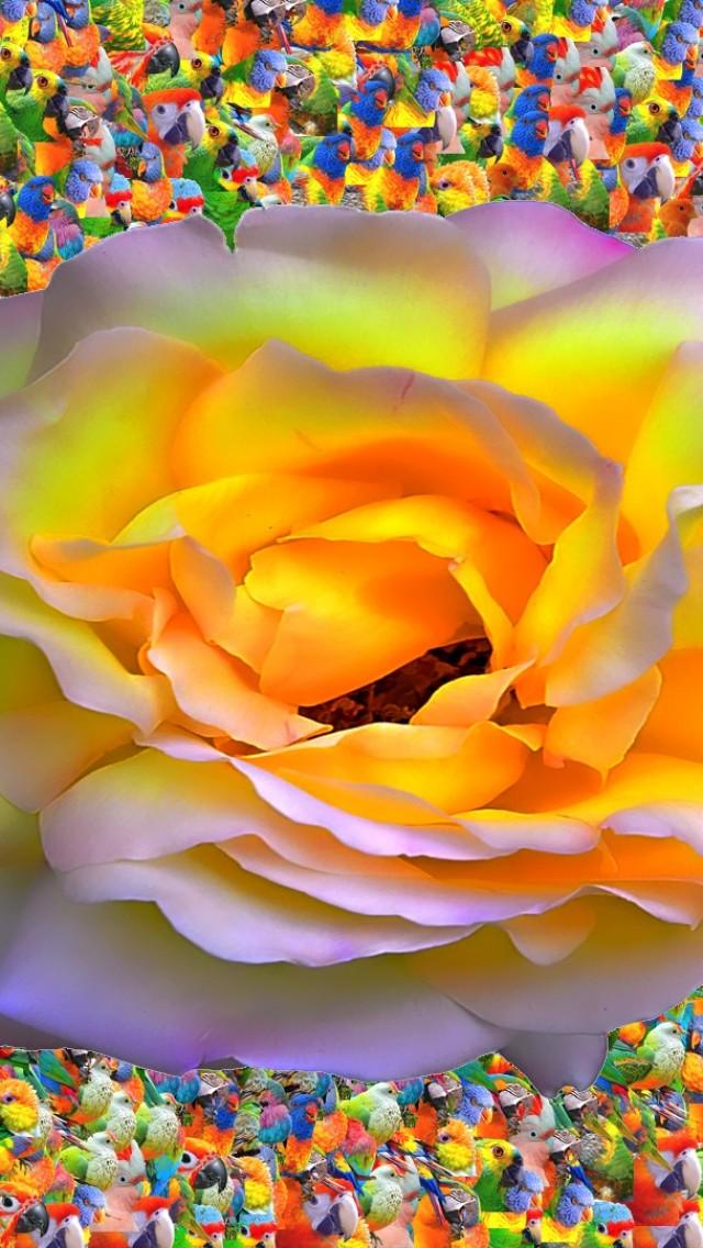 Birds Of Rose  abstract  birds HD Wallpaper