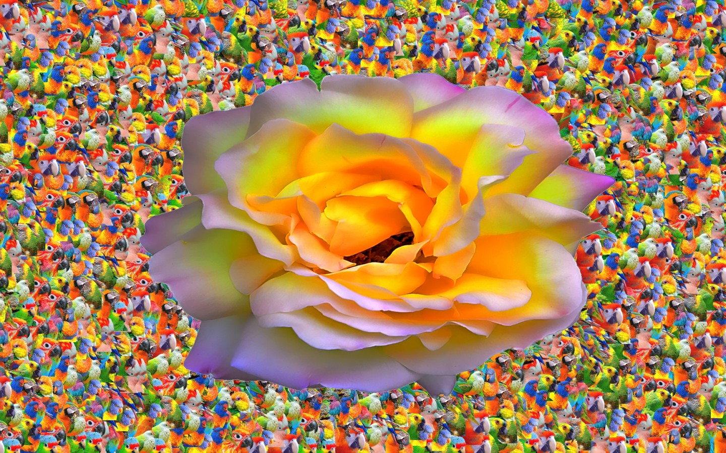 Birds Of Rose  abstract  birds  colorful  flower  glow  nature HD Wallpaper
