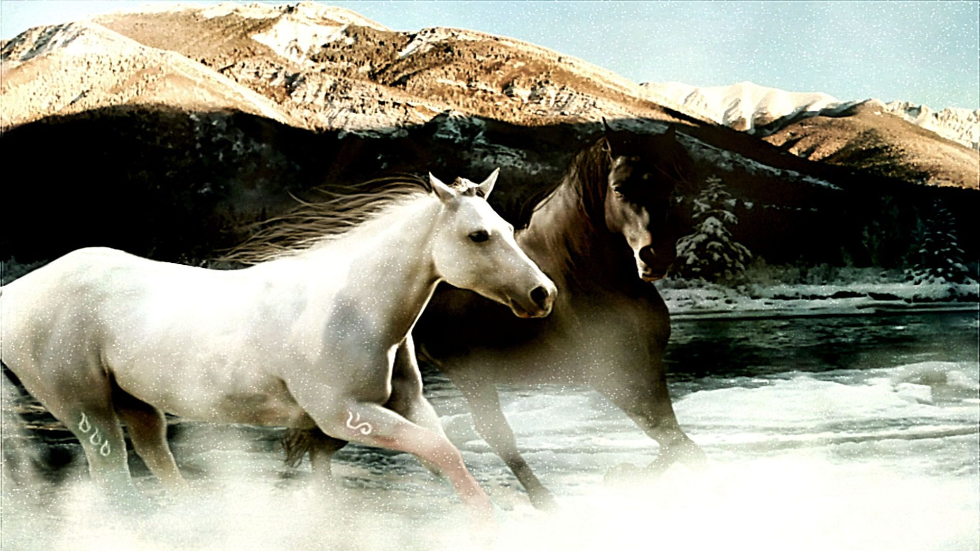 Horses  Blog Archive White And Brown Horse Running HD Wallpaper