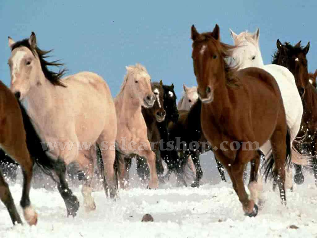 White Snow   Horses Running   Brown   Horse   Animal Oil Painting HD Wallpaper