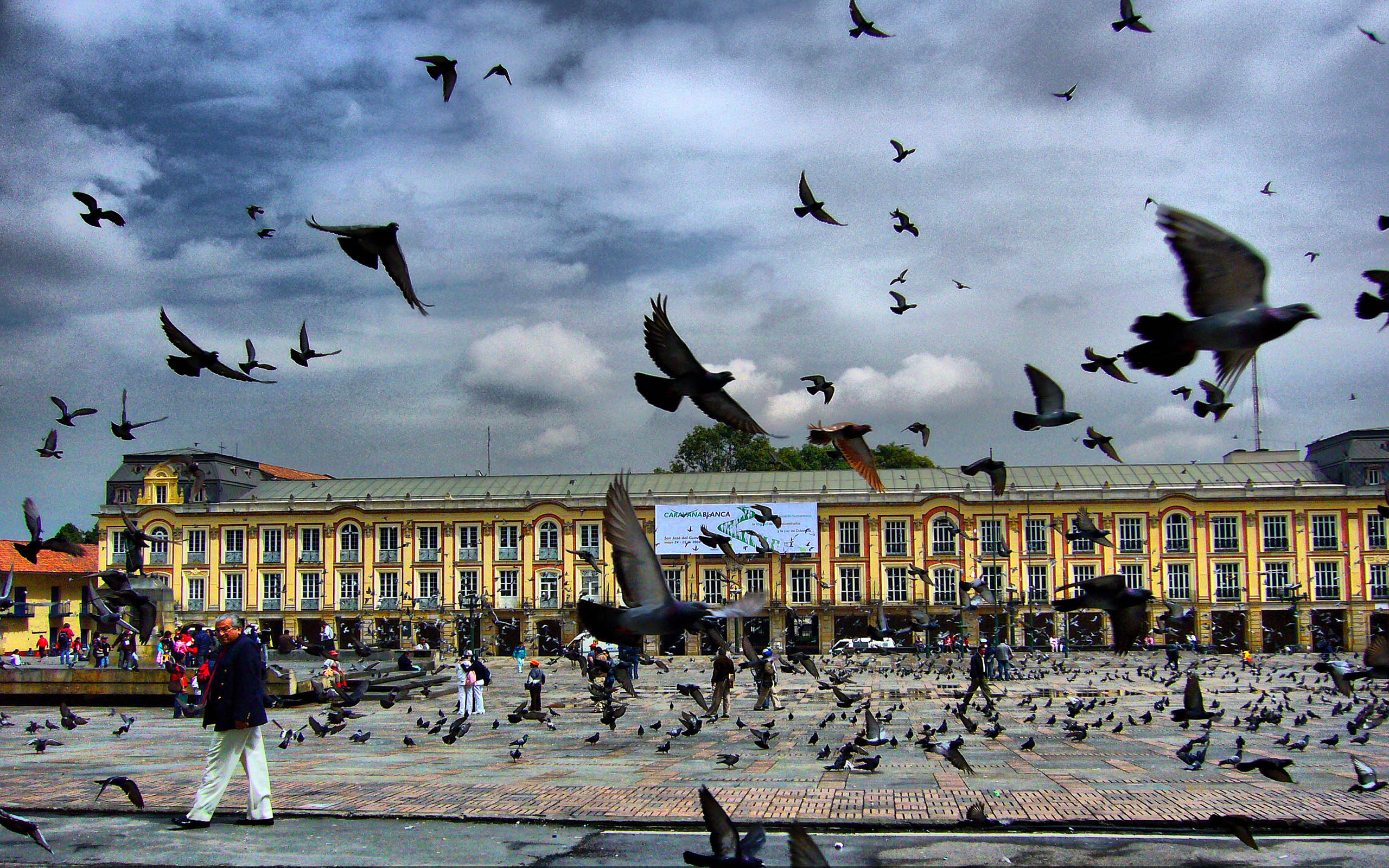 Square Pigeon Bogota   Colombia   Free Download from zet  HD Wallpaper