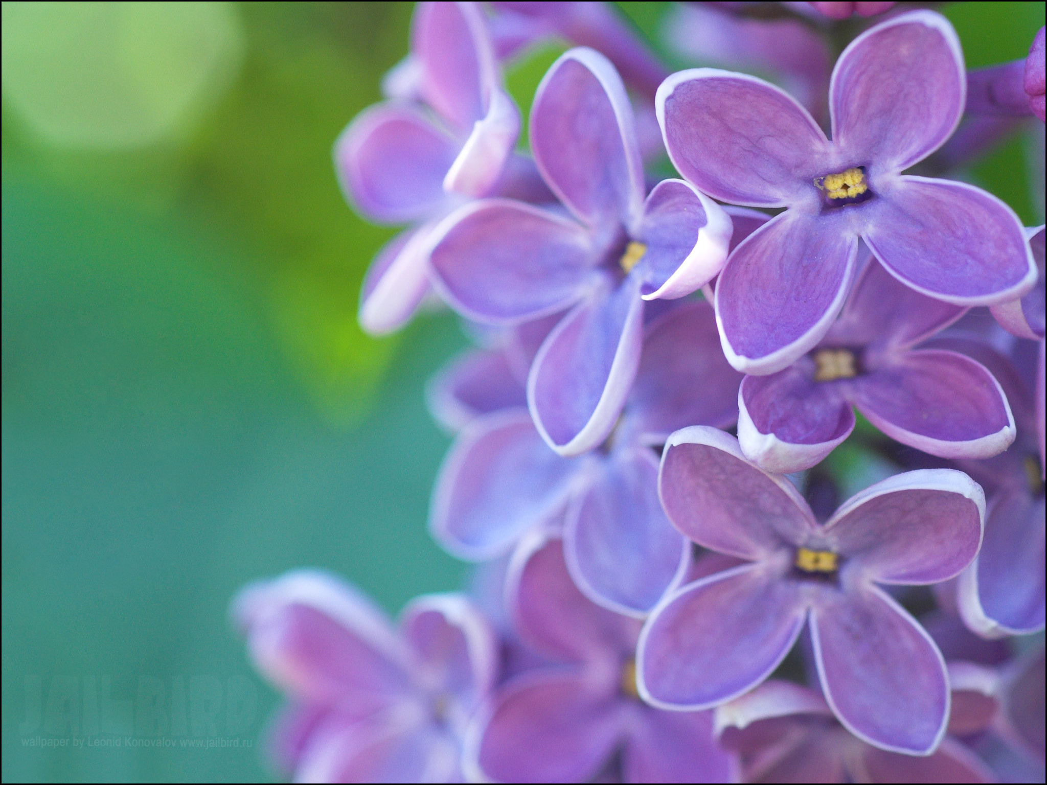 Pin Liliac  Violet Backgrounds Free on Pinterest HD Wallpaper