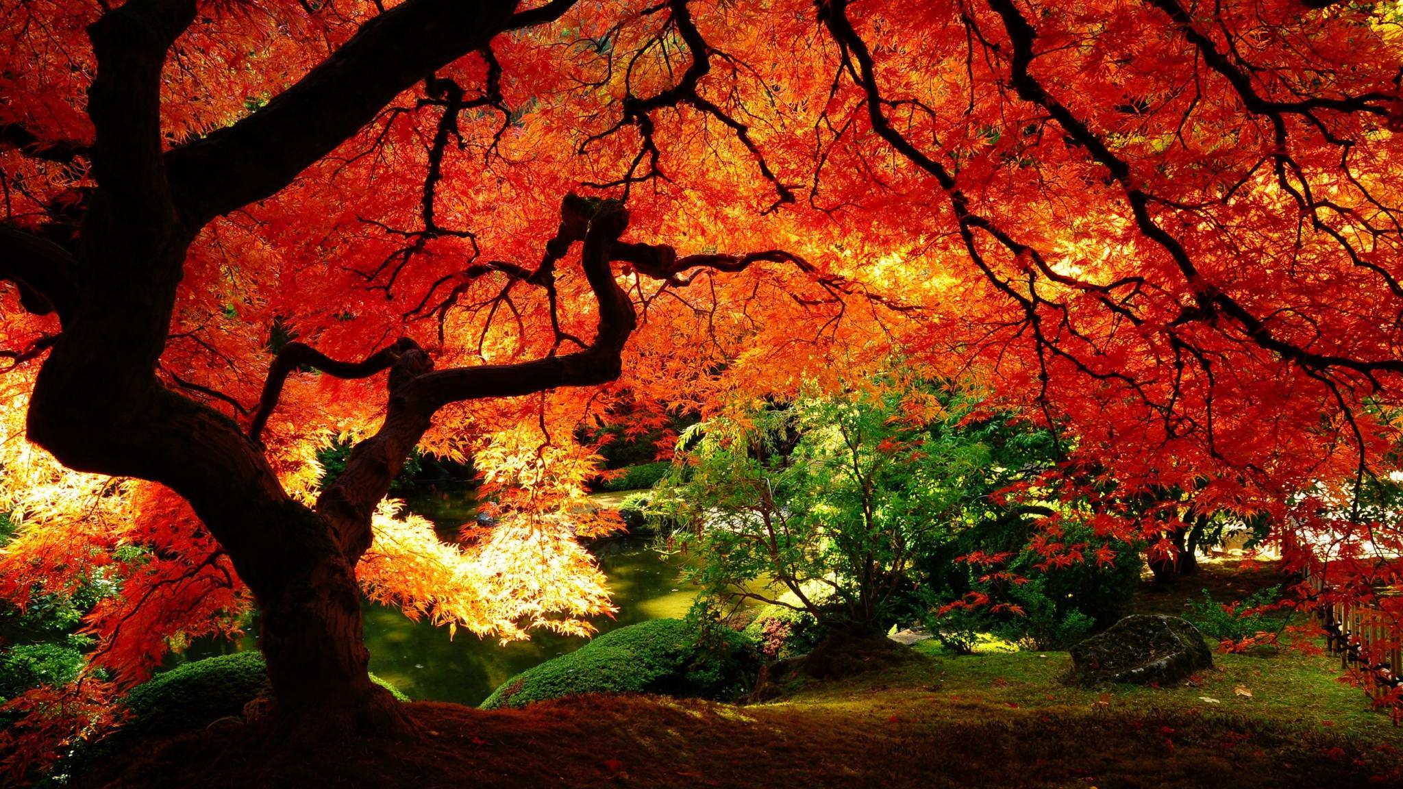 alberi  autunno  natura FOTO SFONDI PER DESKTOP  HD Wallpaper