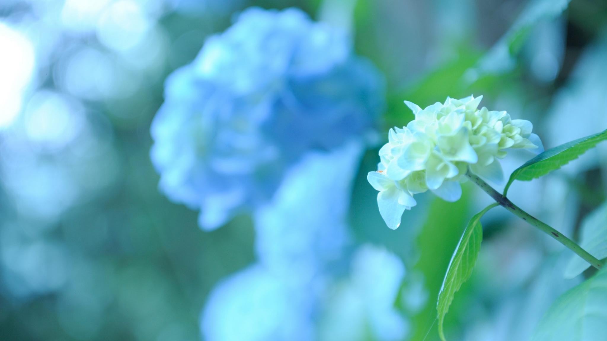 natura  fiori  macro  verde FOTO SFONDI PER DESKTOP  HD Wallpaper