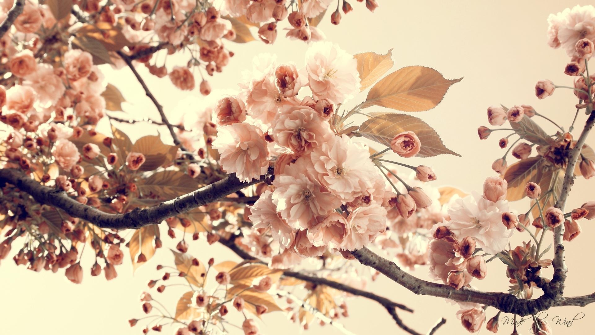Vintage Flowers    Free Desktop  HD Wallpaper