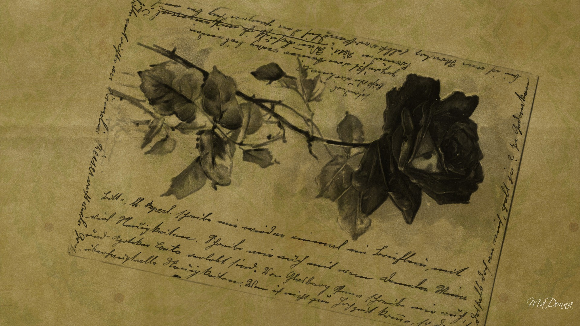 Vintage Look  antique  flower  old paper  rose  vintage  writing HD Wallpaper