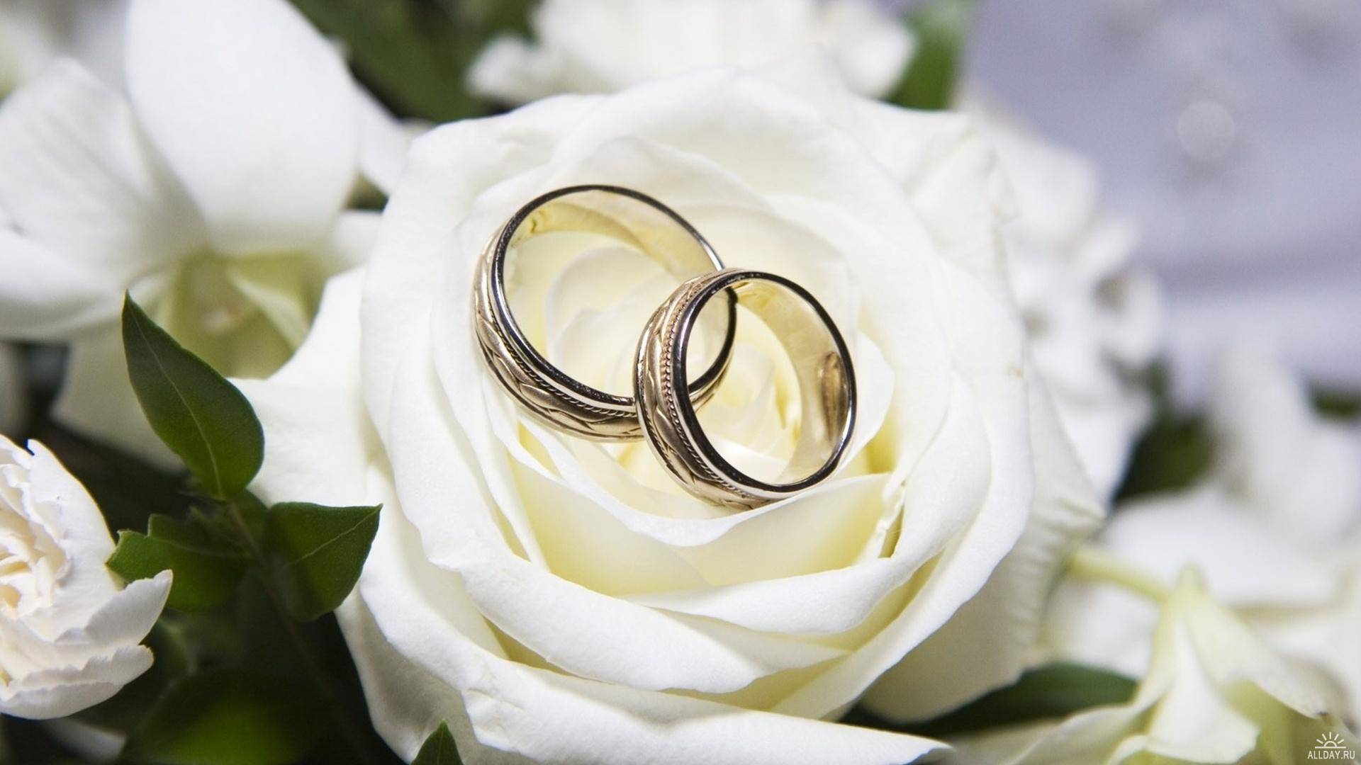 Ring Wedding On White Flower Picture HD  of Wedding HD Wallpaper