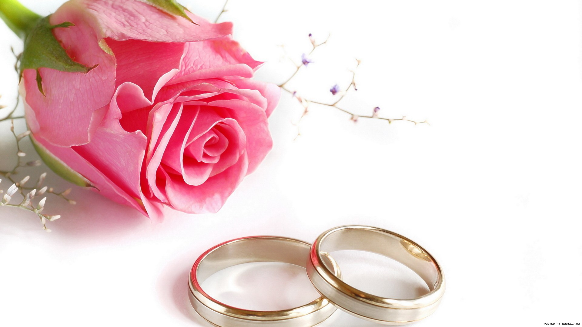 Rings Flower Rose Wedding HD  of Wedding   Best2013  HD Wallpaper