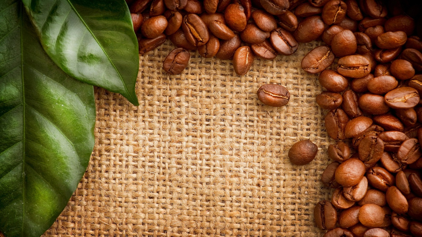Coffe Love Food The Above Is Coffee Beans Green Leaves HD Wallpaper