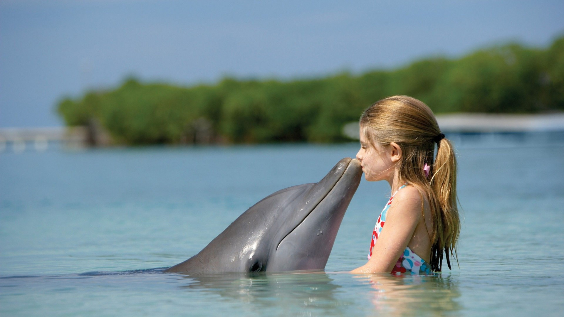 Animal  dolphins  Girl  kiss   HD  HD Wallpaper