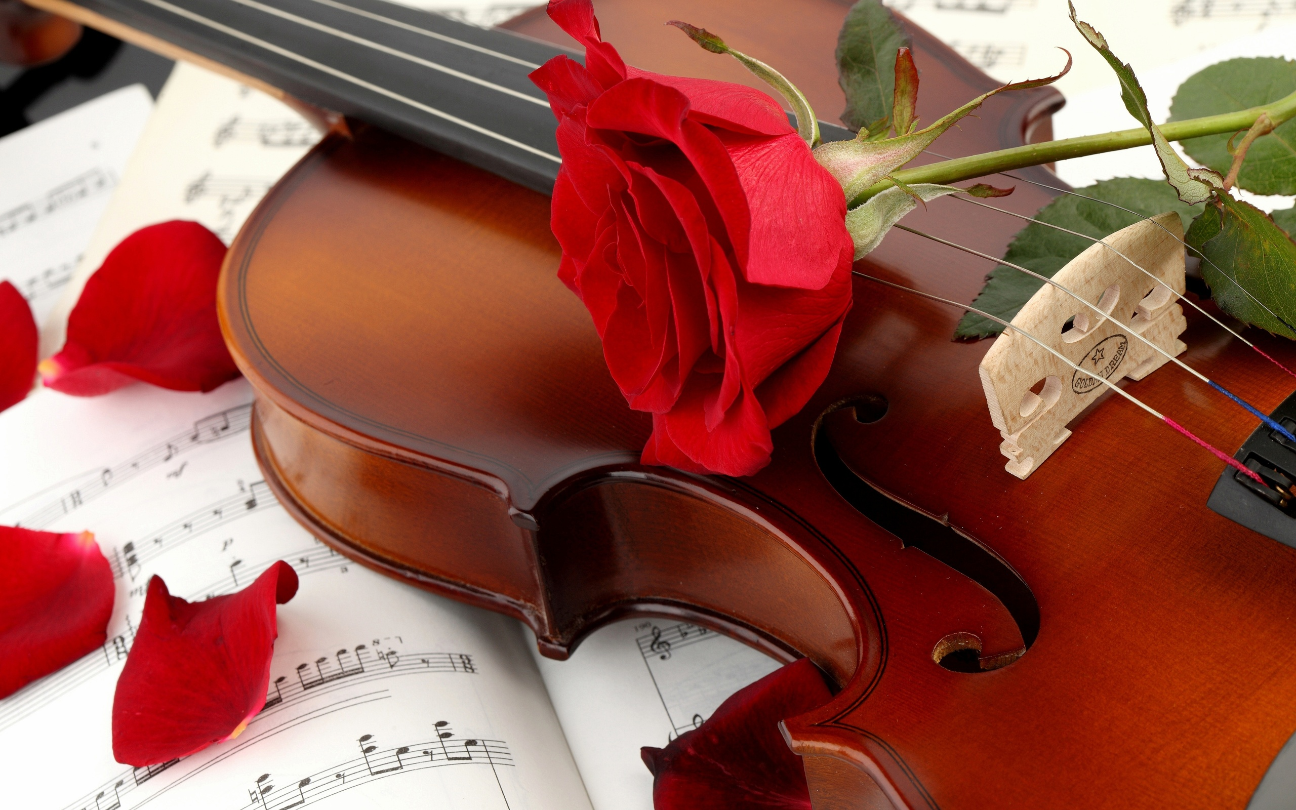 Music  flower  music note  notes  petals  red  Rose HD Wallpaper