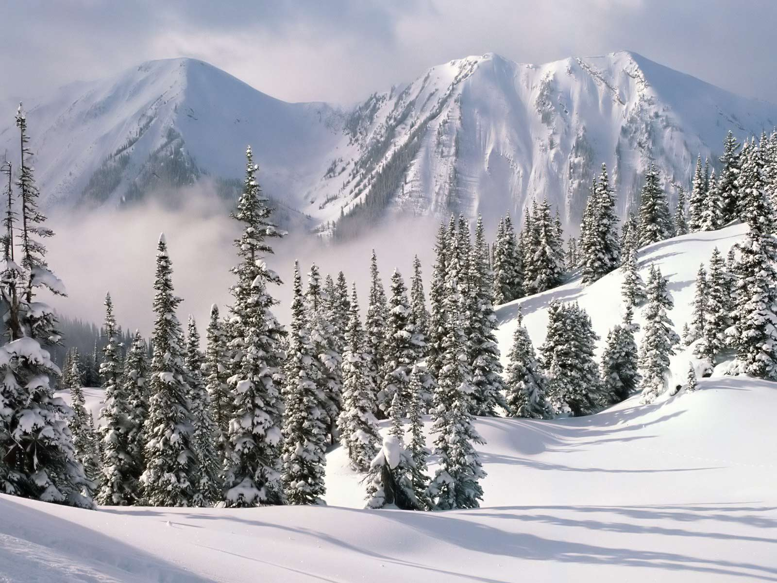 Winter Scene With Snow  87796 HD Wallpaper