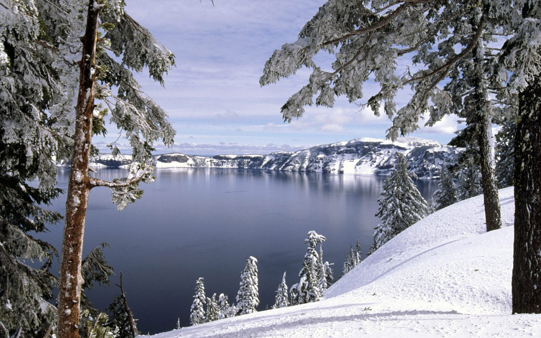 Winter wonderland   Dreamy Snow Scene  1440x900 NO 43 HD Wallpaper