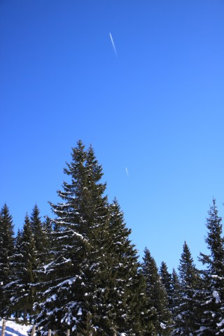 Snowy Trees   Winter Mountain   Gallery II   Public Domain Photos HD Wallpaper