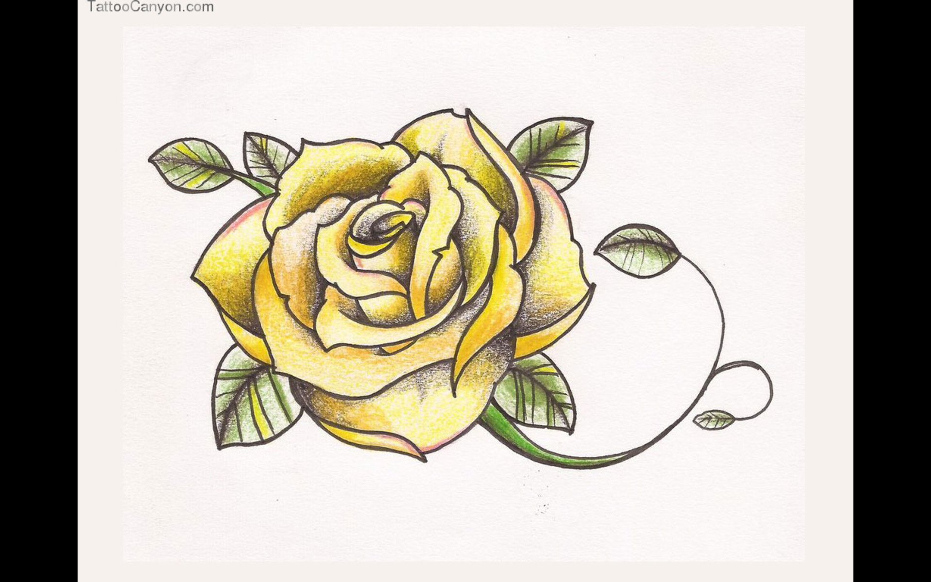 Free Designs Yellow Rose Tattoo  Picture   HD Wallpaper