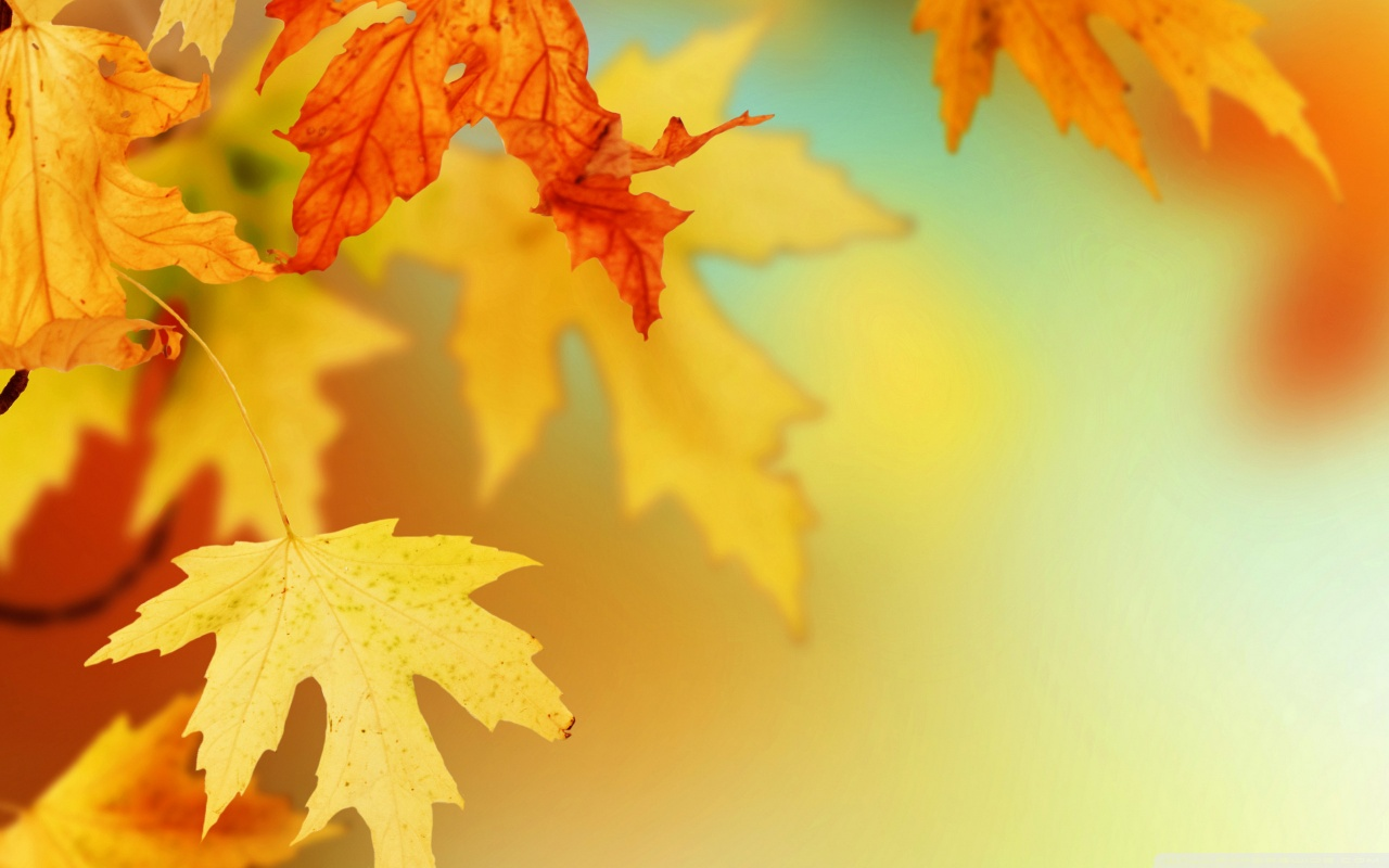 Yellow Autumn Leaves  Macro HD desktop    High Definition HD Wallpaper